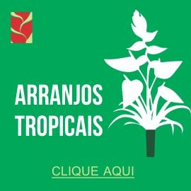 Arranjos Tropicias